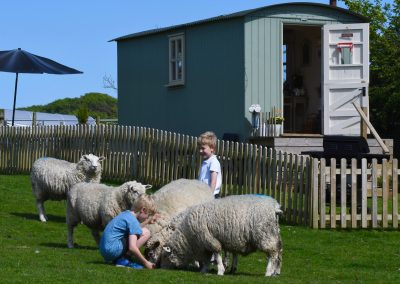 exmoor-glamping-animals